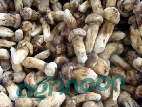 frozen matsutake mushroom