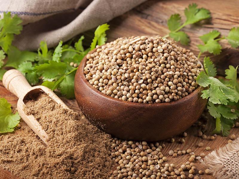 Coriander Seed/ Dhaniya