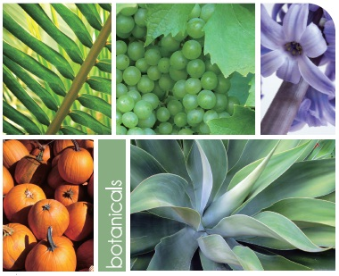 Plant Extracts for Cosmetic Use