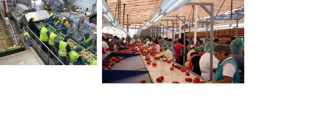 Setting up Vegetables and Fruits Packing House