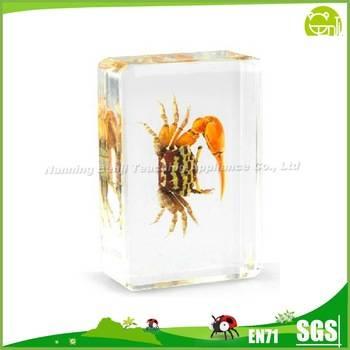 Real Crab Specimen Embedded Animal Specimen for Teaching Aids