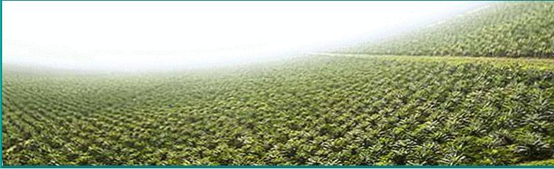 Crude Palm Oil CPO