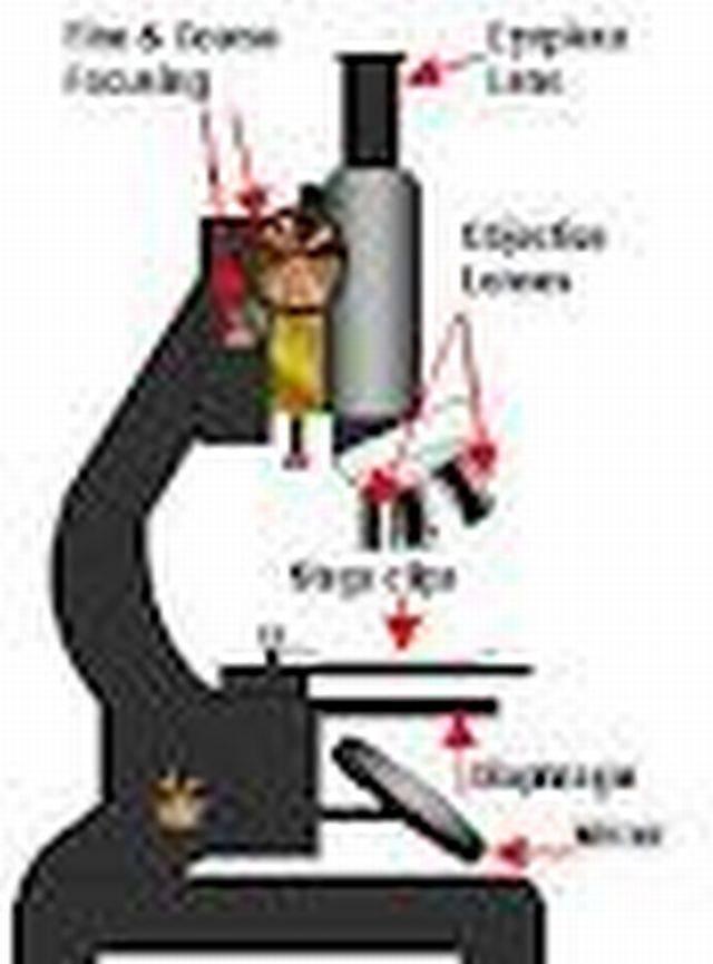 Microscope Optics