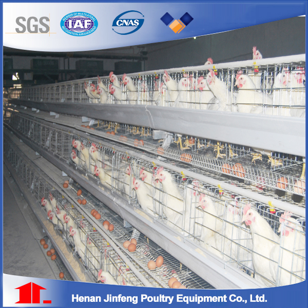 The Best Price Poultry Equipment /New Designed Layer Chickenr Cage Equipment