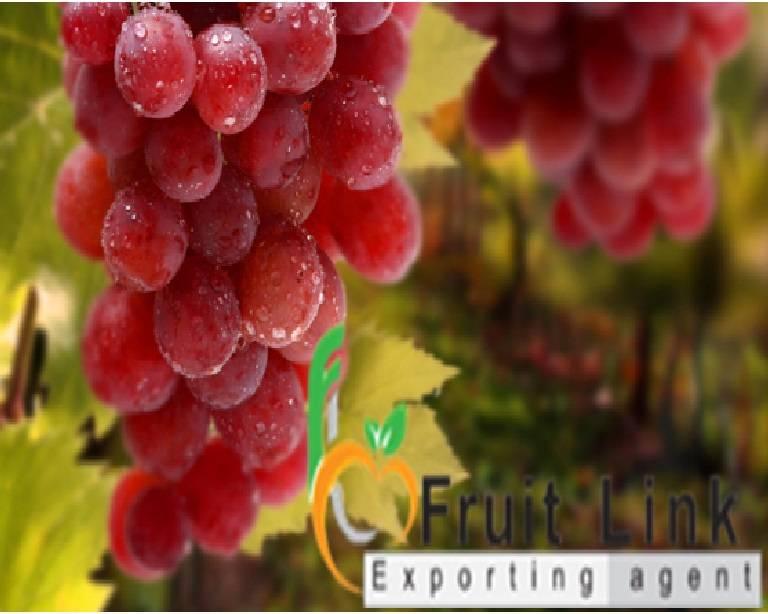 Fresh superior & red globe grapes