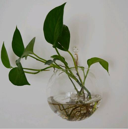 wall hanging glass terrarium hydroponic plant vase
