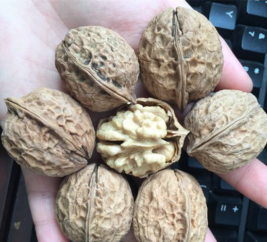 Natural walnut paper thin walnut healthy food