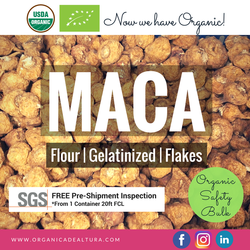 Maca gelatinized powder root (Lepidum meyenii) from peruvian