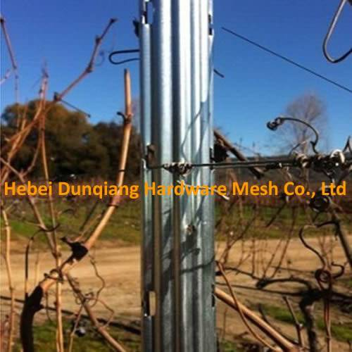 Hot Sale 2.4m Steel Grape Stake