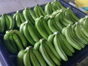 Cavedish Bananas
