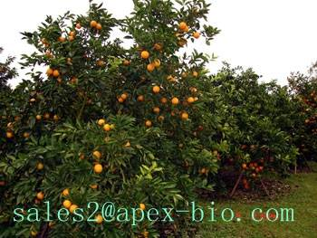 supply best quality Citrus Aurantium Extract  6.0%~30.0% Synephrine Test By HPLC
