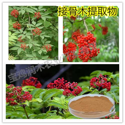 food products ingredients elderberry anthocyanidins 25%