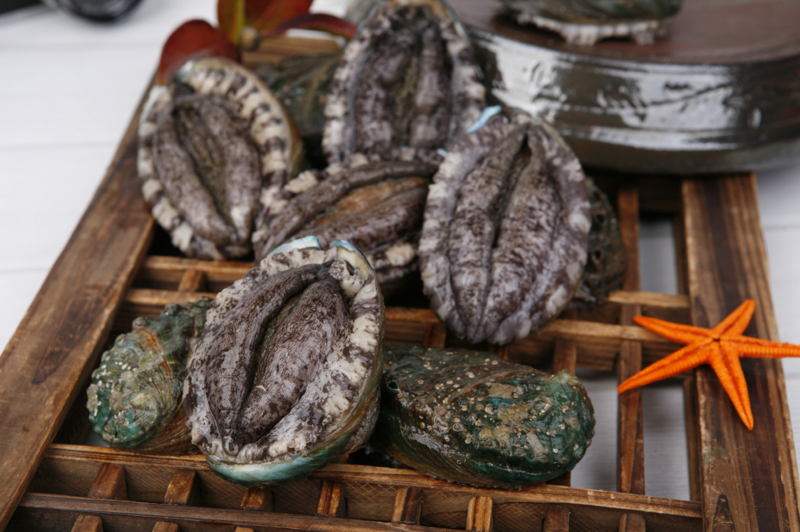 live abalone