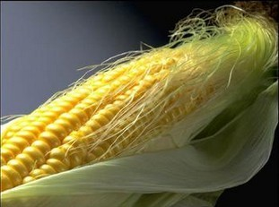 Maize Tassel Extract