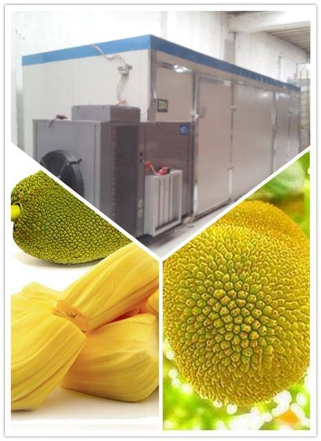 High Efficiency Jackfruit Dryer | Fresh fruit Dehydrator | dried fruit Drying Machine