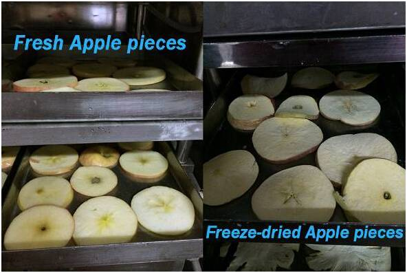 Food Vacuum Freeze Drying Machine