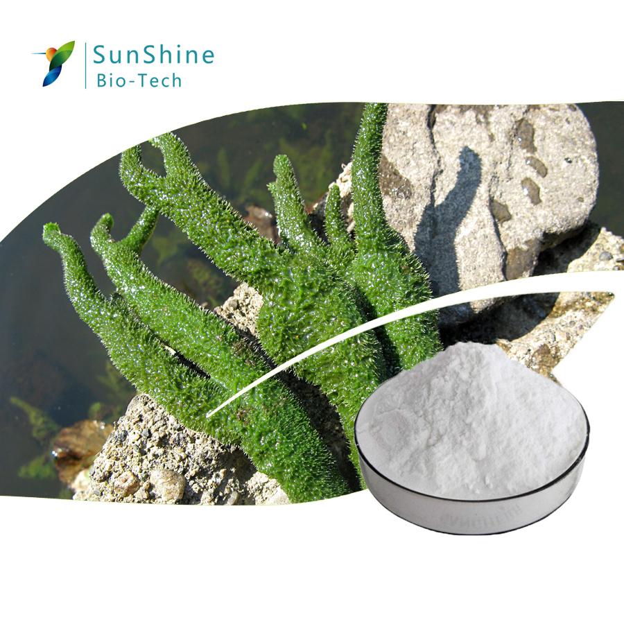 Hot Sale Cosmetic Raw Materials Spongilla Lacustris Extract Powder 98% Hydrolyzed Sponge Spongilla S