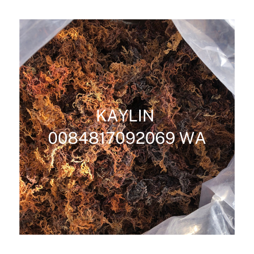 Healthy food Eucheuma Cottonii Seaweed / Dry Sea moss / Irish moss 0084817092069 Whatsapp