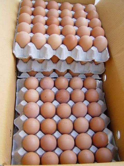 Fresh Table Eggs