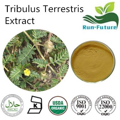 Tribulus Terrestris Extract ,China factory supplier tribulus terrestris powder ,pure natural tribulu