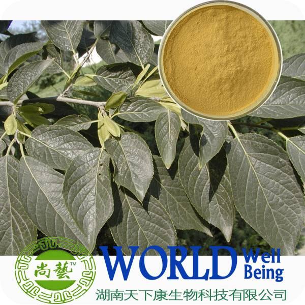 Eucommia Leaf Extract Eucommia Chlorogenic Acid 25%