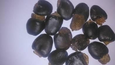 Bhilawa Nut