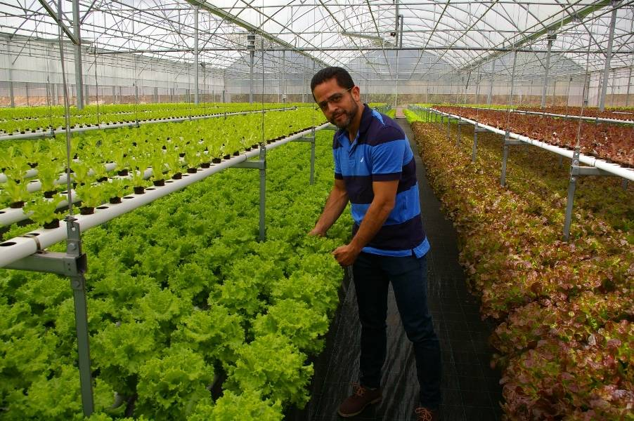 Poly film and Polycarbonate Greenhouses for Hydroponic Systems