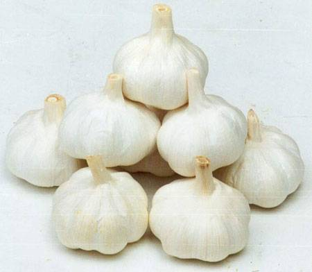 2013 Pure White  fresh garlic