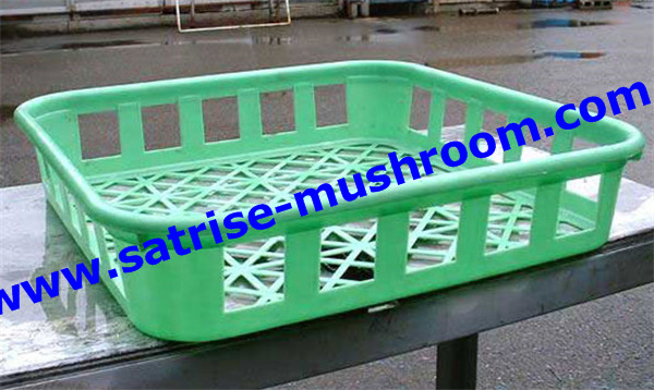 PP compartment disposable frozen mushroom trays
