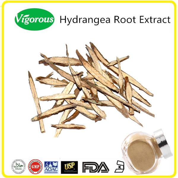 Free samples 10:1 pure natural hydrangea root extract
