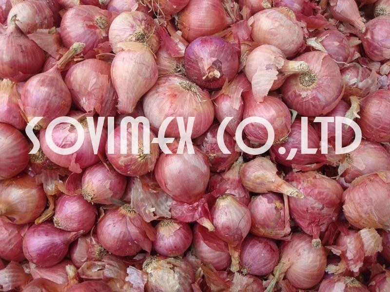 Vietnam Shallot/Onion