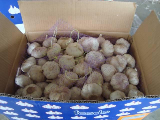 Normal white garlic//10kg loose carton