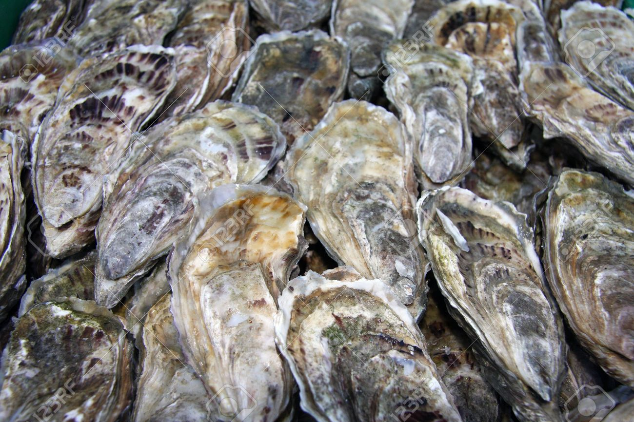 Fresh Oysters, for Sale