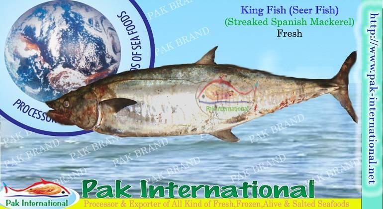 KING FISH (seer fish)