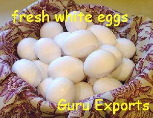 POULTRY EGGS EXPORTERS, FRESH EGGS SUPPLIER, TABLE EGGS CHICKEN FARMS