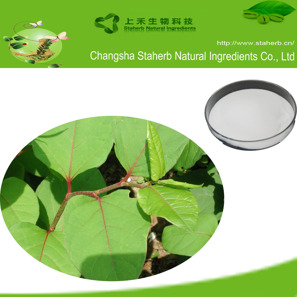 50%-98% Resveratrol of Polygonum cuspidatum extract