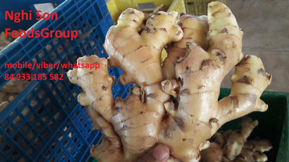 Vietnam Fresh Young Ginger (0084 905 179759)