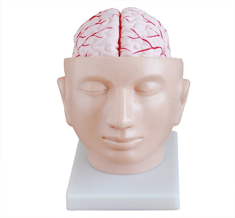 Head with Brain 9 Parts
