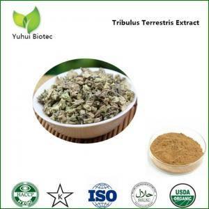 Tribulus terrestris Extract,furostanolic saponins,saponin supplements,tribulus 90% saponin