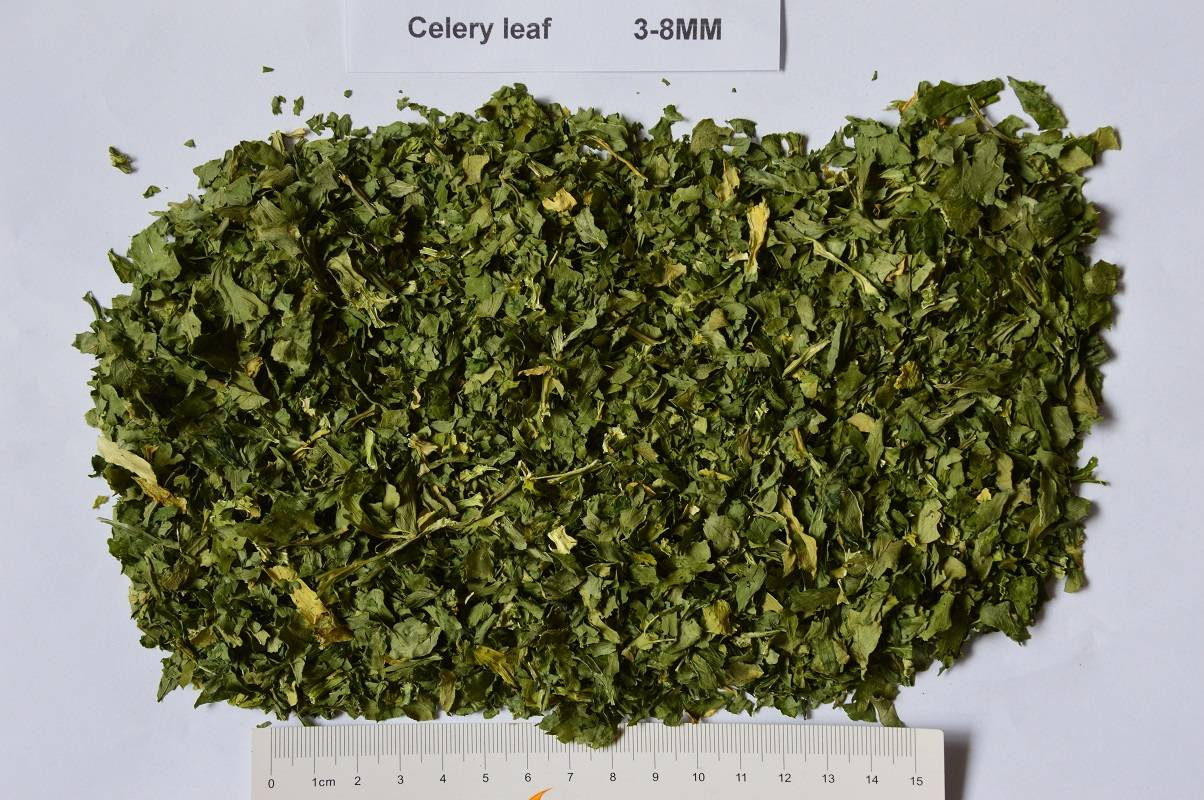 dried celery leaves/dehydrated celery leaves/AD celery leaves