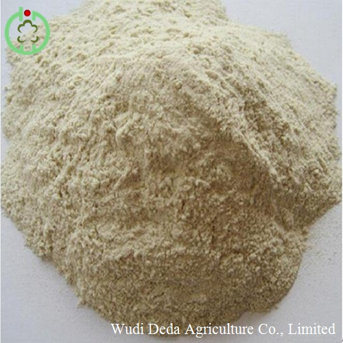 wheat gluten meal animal feed raw material
