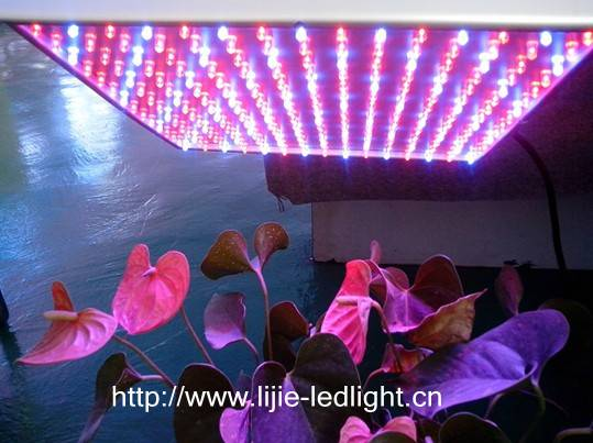 55w red blue led grow light for indoor plant growing (withCE&Rohs&FCC approved)