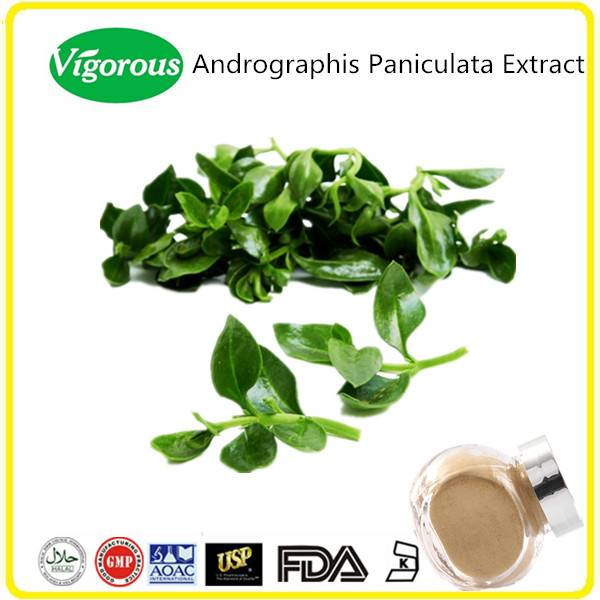 high quality pure natural andrographis paniculata extract
