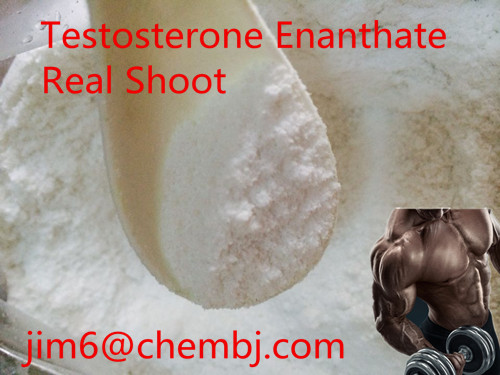 high purity Testosterone Acetate factory price