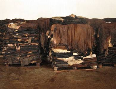 Dry Donkey Hide, Wet Salted Cow Hide, Animal Skins, Rabbit Skin