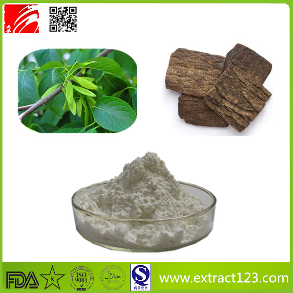 High Quality Eucommia Extract Powder