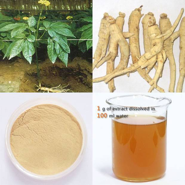 Low pesticide Panax Ginseng Root Extract
