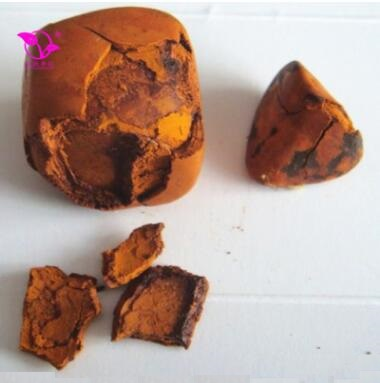 Cattle Gallstone