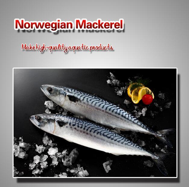 Norwegian Mackerel