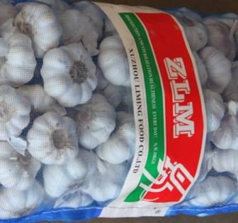 ZLM fresh garlic